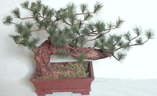 Greeting Pine artificail bonsai
