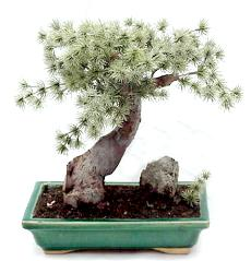 10 inch mini pine artificial bonsai