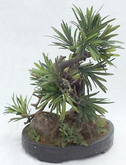 protocarpus artificial bonsai