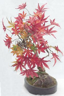 maple leaves bonsai in pot